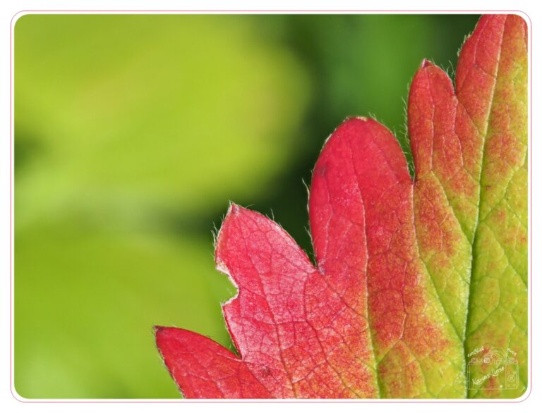 Read more about the article erste Herbstfarben