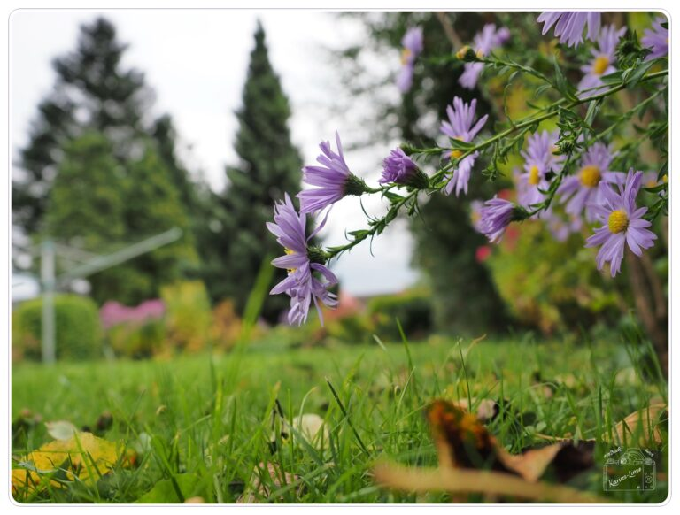 Read more about the article Herbst im Garten
